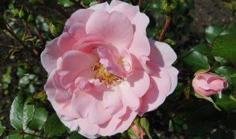 flower-1190031_640